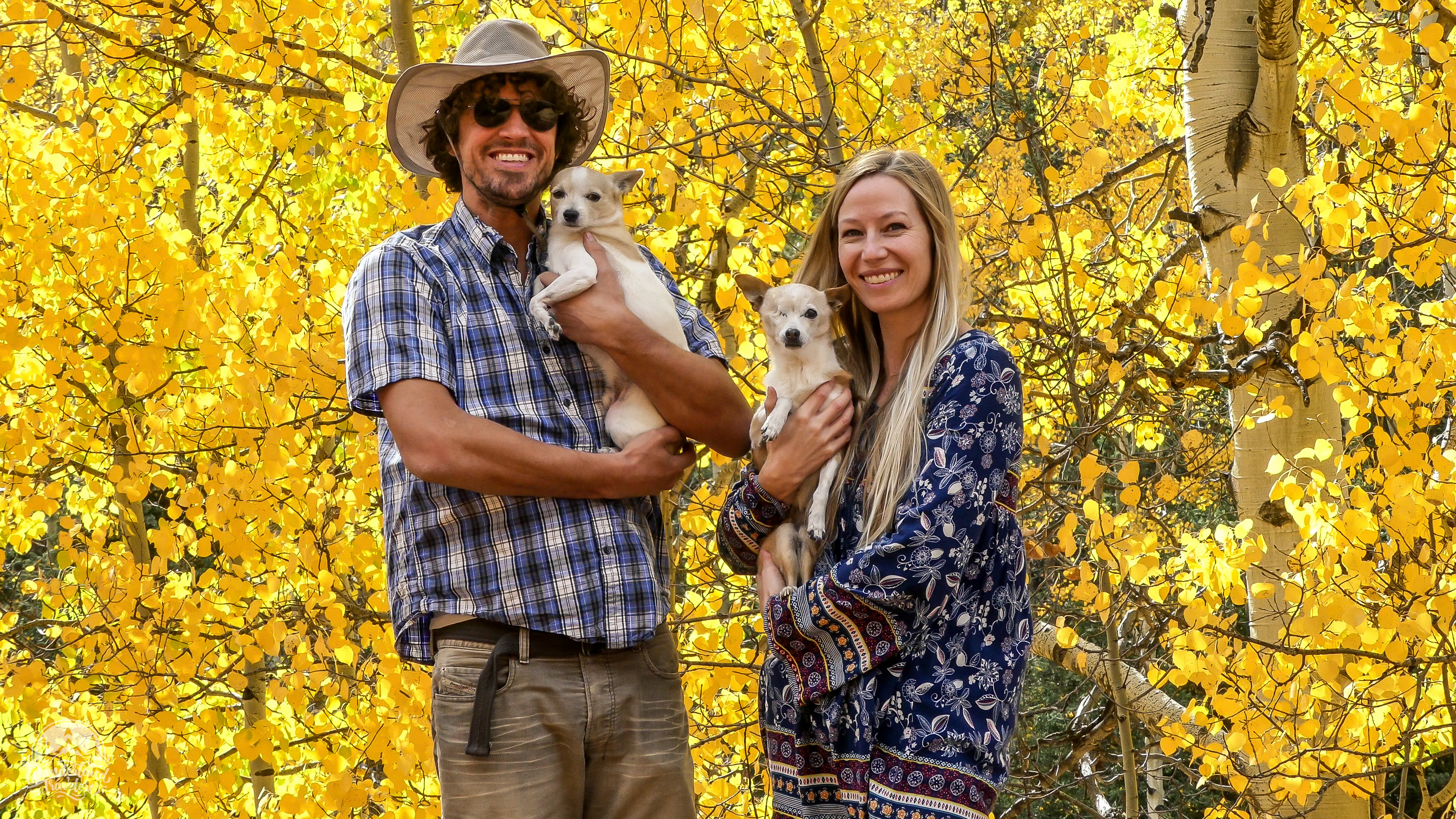 People dogs and yellow aspens
