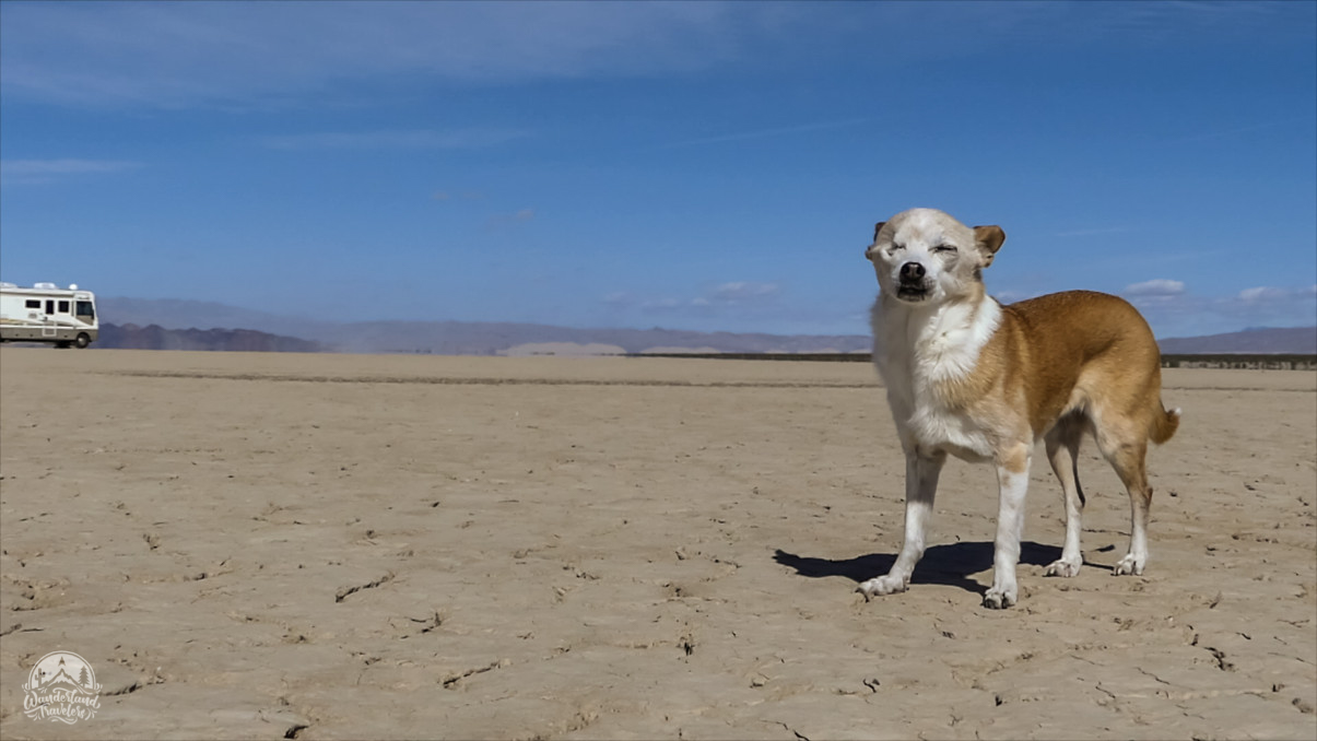 Dog on dry lake bed with RV