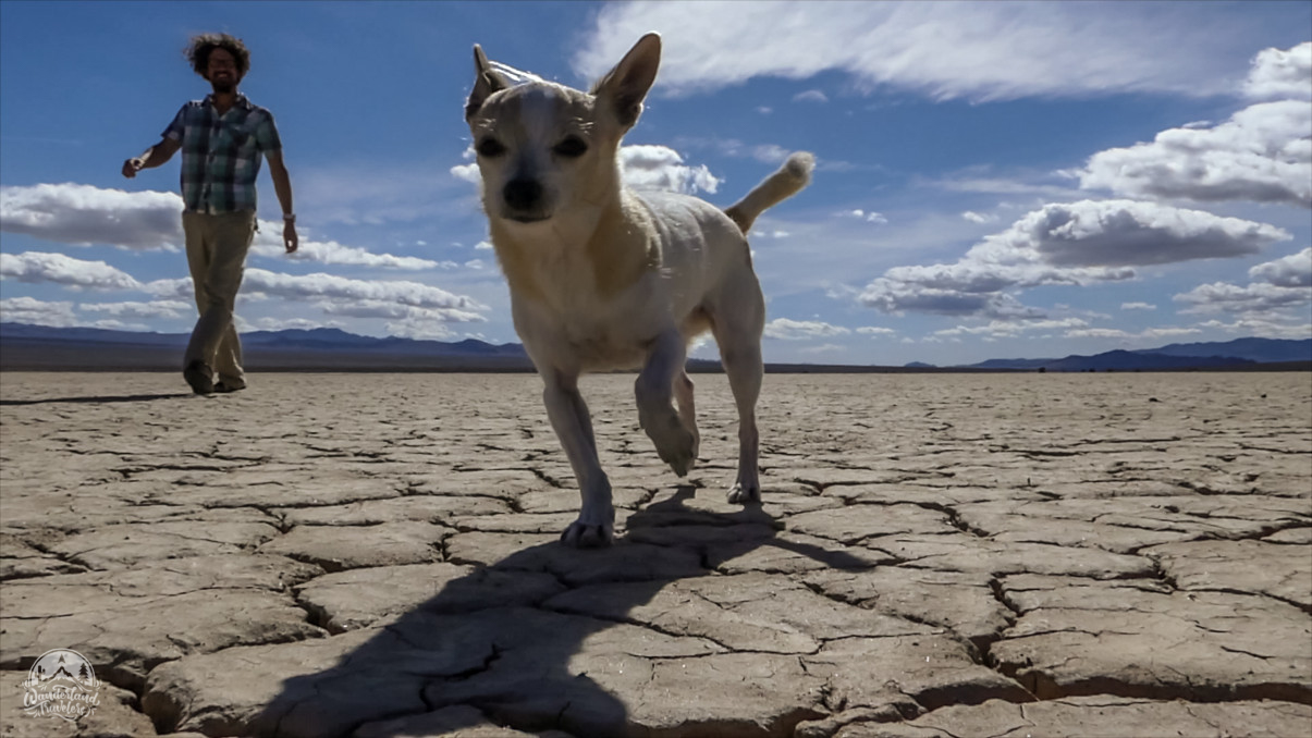 Dog on dry lake bed with man